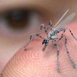 Swarms of cyborg insect drones are the future of military surveillance