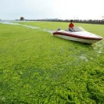 Does Algae Induce Climate Change?