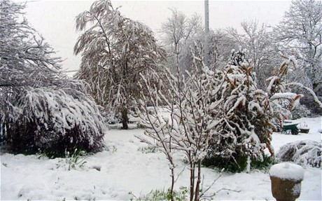 Snow in Shropshire. Click to enlarge