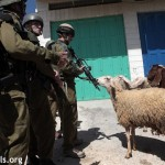 Israeli soldiers threatening Palestinian-owned sheep