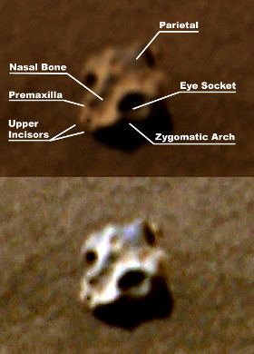 The Mars Rover has also photographed what appear to be skull like objects