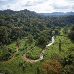 Aerial shots show the thick forests where the City of the Monkey God may have been. Click to enlarge