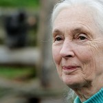 Jane Goodall. Click to enlarge