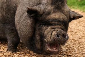 America The Debt Pig: We Are A 'Buy Now, Pay Later' Society