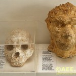 The human skull that challenges the Out of Africa theory