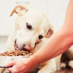 Are We Poisoning Our Pets?
