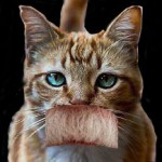 Pussy John Bolton and His Codpiece Mustache