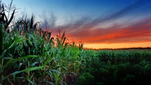 Why Food Systems Are Breaking Down Across The World
