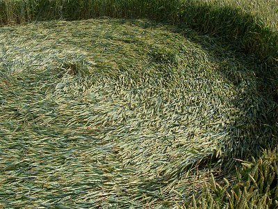 Crop circle viewed from ground zero