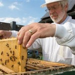 Nearly 100,000 German Beekeepers Just Called For A Ban On GMOs